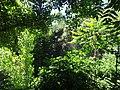 Миоценски спруд Ташмајдан, природни споменик, 002.JPG