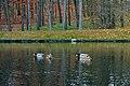 Національний дендрологічний парк «Софіївка3.jpg