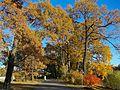 Осень в парке Елагина острова.JPG