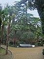 Парк.Тис,пальма,кедр атласский - panoramio.jpg