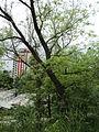 Парк шума Гази Баба во мај (183).JPG