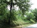 Парк шума Гази Баба во мај (26).JPG