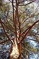 Сила леса - panoramio.jpg