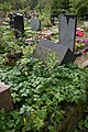 Смоленское Могила Романовский.jpg