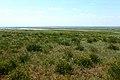 Степная растительность в конце мая - panoramio.jpg