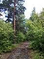 Тропа таинственного леса.jpg