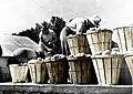בהכשרת השומר הצעיר ב- Heights town ליד ניו גרסי ארהב 1940 - iיהודה סלע btm1433.jpeg