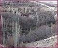 دره ی زیبای روستای جاوان - panoramio.jpg