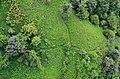 نمای از داخل تله کابین لاهیجان - panoramio (1).jpg