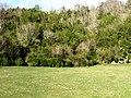 ბზის ტყე, დეკებბერი 2010 - panoramio.jpg