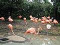 上野動物公園, Ueno Zoo(Ueno Zoological Gardens) - panoramio (22).jpg