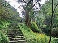 南山古道的春天里 - panoramio.jpg