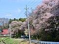 無量寿寺 2012年4月 - panoramio.jpg