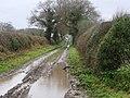 -2021-01-20 Looking south along a farm track, Crostwight, Norfolk.jpg