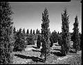 04.08.1964. Vue de la propriété. (1964) - 53Fi4726.jpg