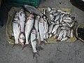 06586jfCandaba, Pampanga Market Fishes Foods Landmarksfvf 03.jpg