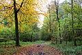 0 Maisières - Bois du Gard et de la Quarte (1).JPG