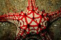 12-EastTimor-Dive Pertamina-Pier 02 (Starfish)-APiazza.JPG
