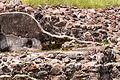 15-07-13-Teotihuacan-RalfR-WMA 0163.jpg