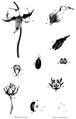 1839 BostonJournal NaturalHistory v2 illus4.png