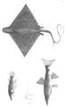 1844 BostonJournal NaturalHistory v4 illus4.png
