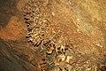 192 Helictites 8 (8316547371).jpg
