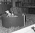 1960 Nurserie à Brouessy Cliché Jean-Joseph weber-6.jpg