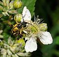 2012-06-14 15-32-02-Cerambycidae.jpg