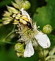 2012-06-14 15-32-31-Cerambycidae.jpg