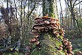 20141113 024 Well De Hamert Paddenstoel (15781121471).jpg