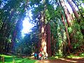 2016 Muir Woods National Monument P3301049.jpg