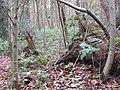 2017-01-02 Pretty corner woods.JPG