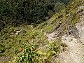 20170904 Papouasie Baliem valley 7.jpg