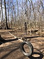 2021-03-11 14 00 46 A tire swing attached to a tree in a wooded area of the Franklin Farm section of Oak Hill, Fairfax County, Virginia.jpg