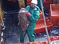 30052015585aboard trawler African Queen.jpg