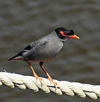 3485c myna,bank bithur 2007may05 09.46.54.jpg