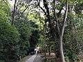 5 Chome Jindaiji Motomachi, Chōfu-shi, Tōkyō-to 182-0017, Japan - panoramio (27).jpg