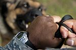 86th SFS welcomes new MWD 160712-F-ZC075-031.jpg