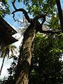 9951aajfPelagio Leon Mansions Housefvf 36.jpg