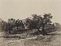 A. Salzmann - Porte d'Hérode - Jerusalem.jpg