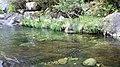A Pobra do Caramiñal río Pedras 43.jpg