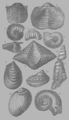 A Treatise on Geology, plate 6.png