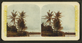 A picturesque Hawaiian railway scene, from Robert N. Dennis collection of stereoscopic views.png