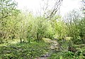 A scrubland path on NT land north of Ty Newydd - geograph.org.uk - 417157.jpg