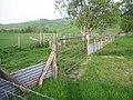 A sheepfold - geograph.org.uk - 795738.jpg