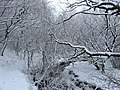 A winter wonderland on the Leeds Country Way , Pudsey. - geograph.org.uk - 134083.jpg