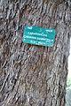 Acharya Jagadish Chandra Bose Indian Botanic Garden - Howrah 2011-01-08 9834.JPG