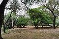 Acharya Jagadish Chandra Bose Indian Botanic Garden - Howrah 2011-02-20 1569.JPG