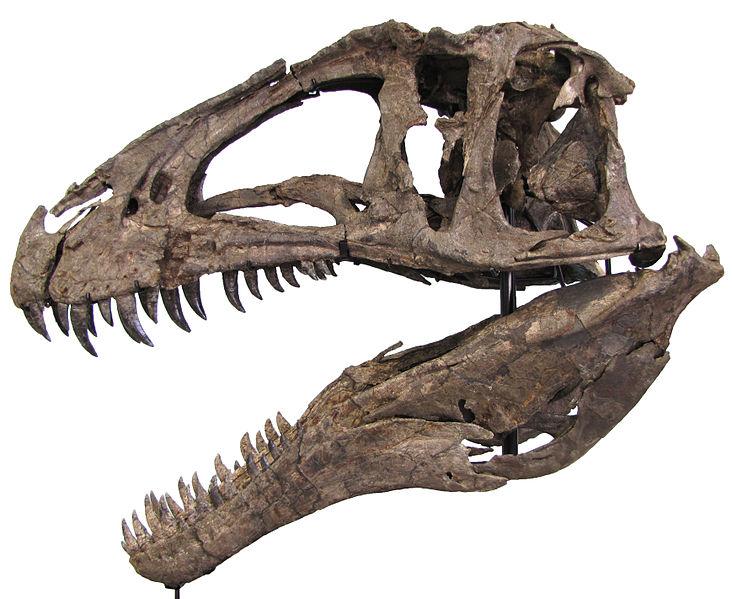 File:Acrocanthosaurus Hendrickx.jpg