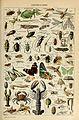 Adolphe Millot arthropodes-pour tous.jpg